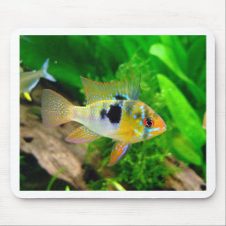 Exotic Fish Mouse Pad
