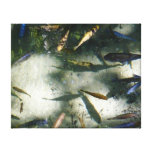 Exotic Fish Pond Colorful Animal Photography Canvas Print