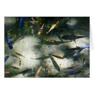 Exotic Fish Pond Colorful Animal Photography Card