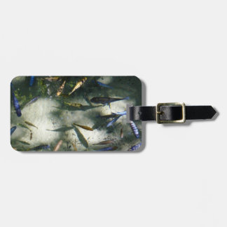 Exotic Fish Pond Colorful Animal Photography Luggage Tag