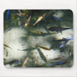 Exotic Fish Pond Colorful Animal Photography Mouse Pad