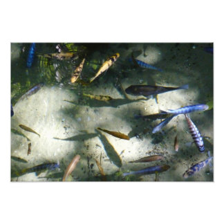 Exotic Fish Pond Colorful Animal Photography Photo Print