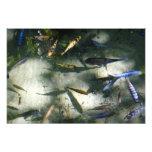 Exotic Fish Pond Colorful Animal Photography Photo Print