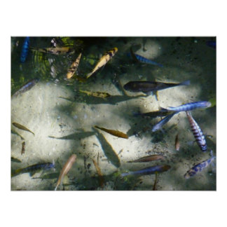 Exotic Fish Pond Colorful Animal Photography Poster