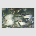 Exotic Fish Pond Colorful Animal Photography Rectangular Sticker