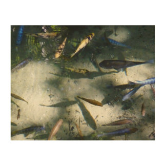 Exotic Fish Pond Colorful Animal Photography Wood Wall Art
