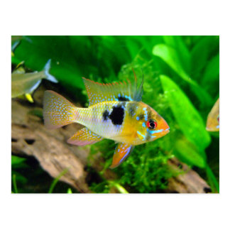 Exotic Fish Post Cards