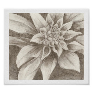 Exotic Flower Drawing Poster