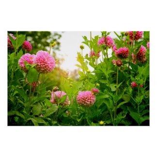 Exotic Flower Landscape Photography Poster