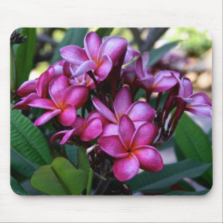 Exotic flower, Mousepad