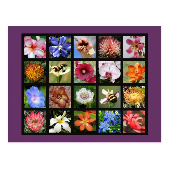 Exotic Flowers from Around the World Postcard