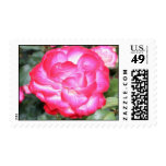Exotic Hot Pink Flower Postage Stamps