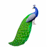 "Exotic Indian Blue Peacock Pin Cutout<br><div class=""desc"">Original fine art design of an exotic blue Indian peacock by artist Carolyn McFann of Two Purring Cats Studio printed on a quality acrylic pin for peafowl fans.</div>"