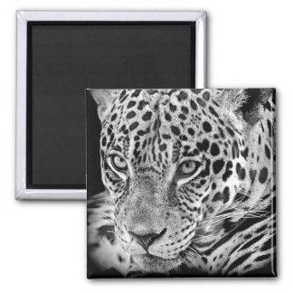 Exotic Jaguar Magnet
