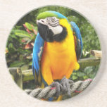 Exotic Macaw Parrot Beverage Coasters