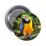 Exotic Macaw Parrot Button