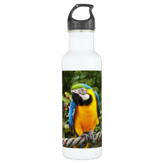 Exotic Macaw Parrot 24oz Water Bottle