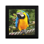 Exotic Macaw Parrot Trinket Box