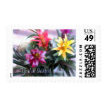Exotic Mixed Bromeliads Stamps