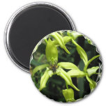 Exotic Orchid Magnet Fridge Magnets