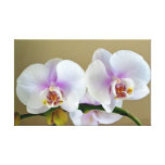 Exotic Orchid Photograph on Canvas Art Gallery Wrapped Canvas