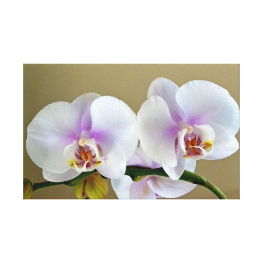 Exotic Orchid Photograph on Canvas Art