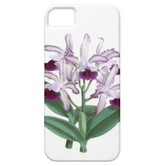 Exotic Orchid Plant Purple Flowers no 4 Cover For iPhone 5/5S