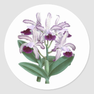 Exotic Orchid Plant Purple Flowers no.4 Classic Round Sticker