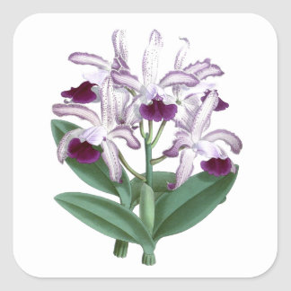 Exotic Orchid Plant Purple Flowers no.4 Square Sticker