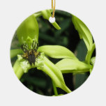 Exotic Orchids Ornament