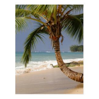 exotic palm tree on beach postcard