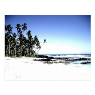 Exotic Palm Trees & Paradise Beach Postcard
