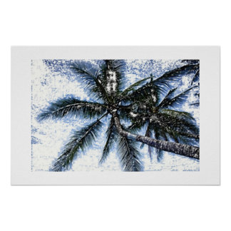Exotic Palm Trees Posters Prints