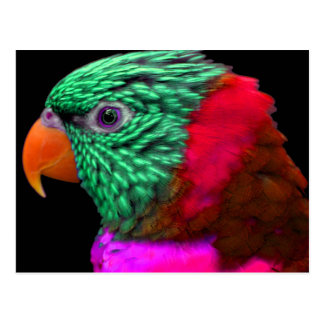 Exotic Parrot Green Red Pink Postcard