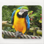 Exotic Parrot Mouse Pad