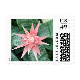 Exotic Pink Bromeliad Flower Postage Stamp