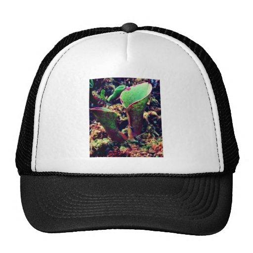 Exotic Plant Carnivore Mesh Hat