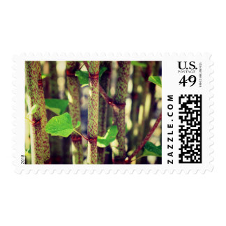 Exotic Plant Postage Stamp