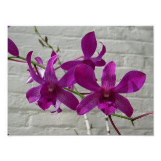 Exotic Purple Orchid Flowers Poster