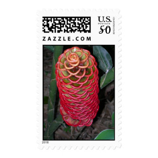 Exotic Red Flower Postage