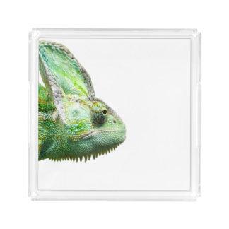 Exotic Reptile Acrylic Tray