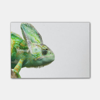 Exotic Reptile Post-it Notes