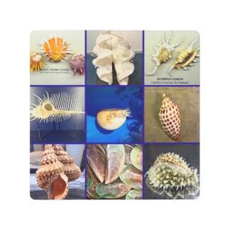 Exotic SeaShell Photography Sanibel Island Florida Metal Print