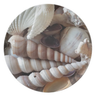Exotic Seashells Collection, Summer Beach Plate