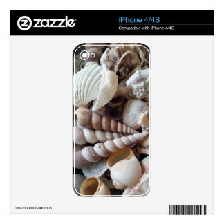Exotic Seashells Collection, Summer Beach iPhone 4 Decals