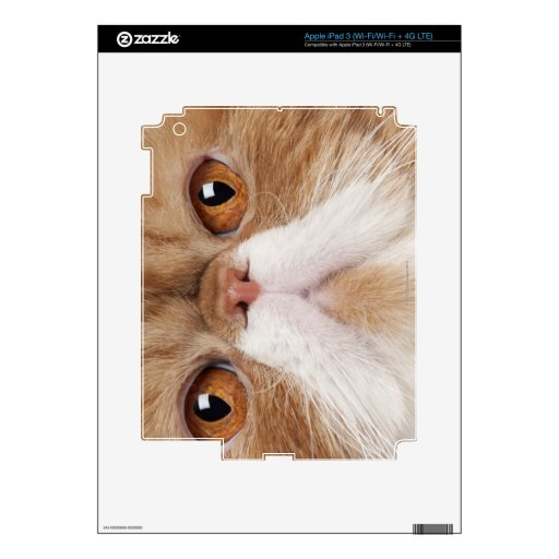 Exotic Shorthair (2,5 years old) iPad 3 Decals