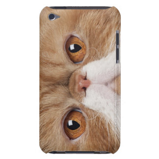 Exotic Shorthair (2,5 years old) iPod Touch Case-Mate Case