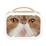 Exotic Shorthair (2,5 years old) Lunch Box