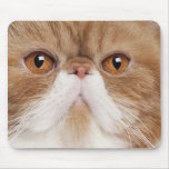 Exotic Shorthair (2,5 years old) Mousepad
