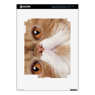 Exotic Shorthair (2,5 years old) Skins For iPad 3